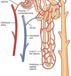 diagram of urinalysi [ 768 x 1084 Pixel ]