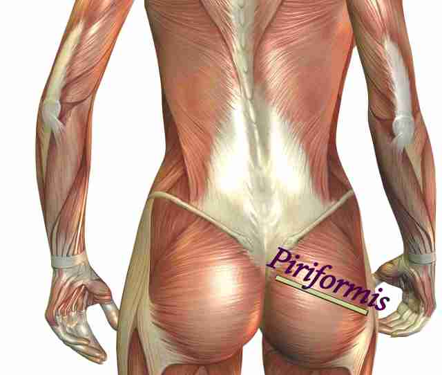 The Piriformis Muscle Is On Top Of The Sciatic Nerve In The Buttock