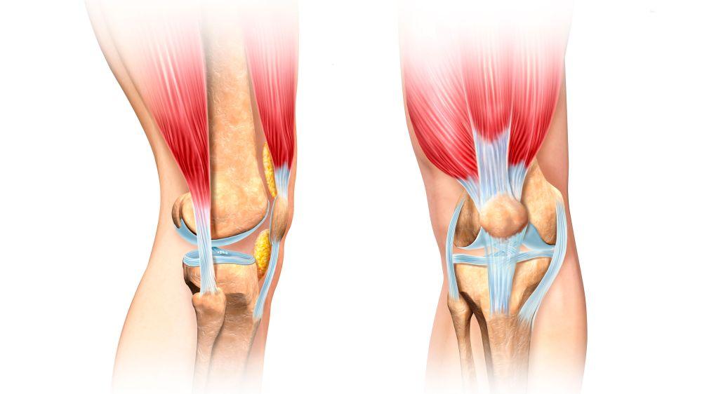 medium resolution of foot structure diagram