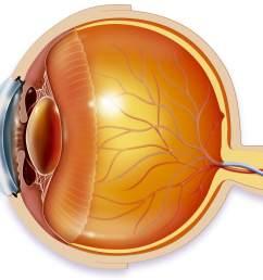 anatomy of an eye illustration [ 1871 x 1603 Pixel ]