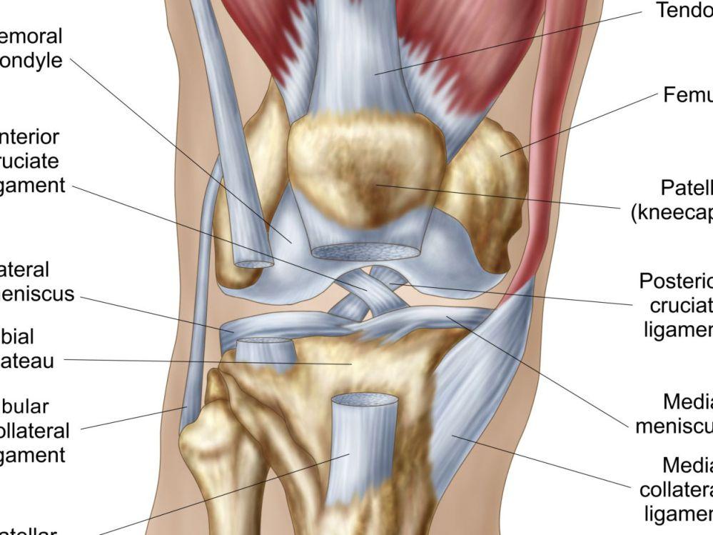 medium resolution of basic typical joint bone diagram