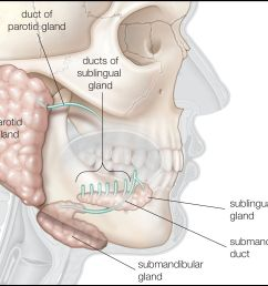diagram of infected salivary gland [ 2544 x 2032 Pixel ]