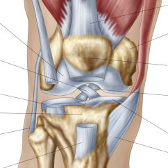 Diagram Of The Knee And Ligaments Roper Washing Machine Parts What Is Causing Your Pain