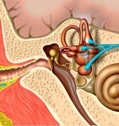 ear external ear diagram bone [ 3633 x 2044 Pixel ]