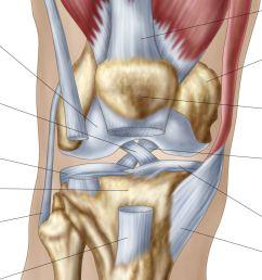 normal knee joint [ 1403 x 935 Pixel ]