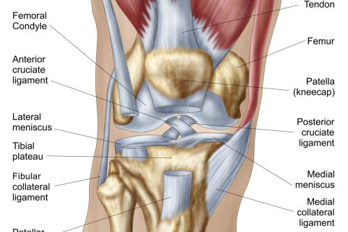 small resolution of normal knee joint