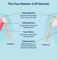 rotator cuff diagram [ 1500 x 1000 Pixel ]