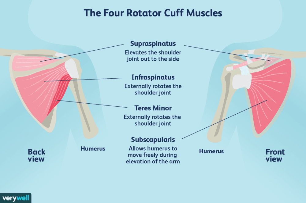 medium resolution of rotator cuff diagram