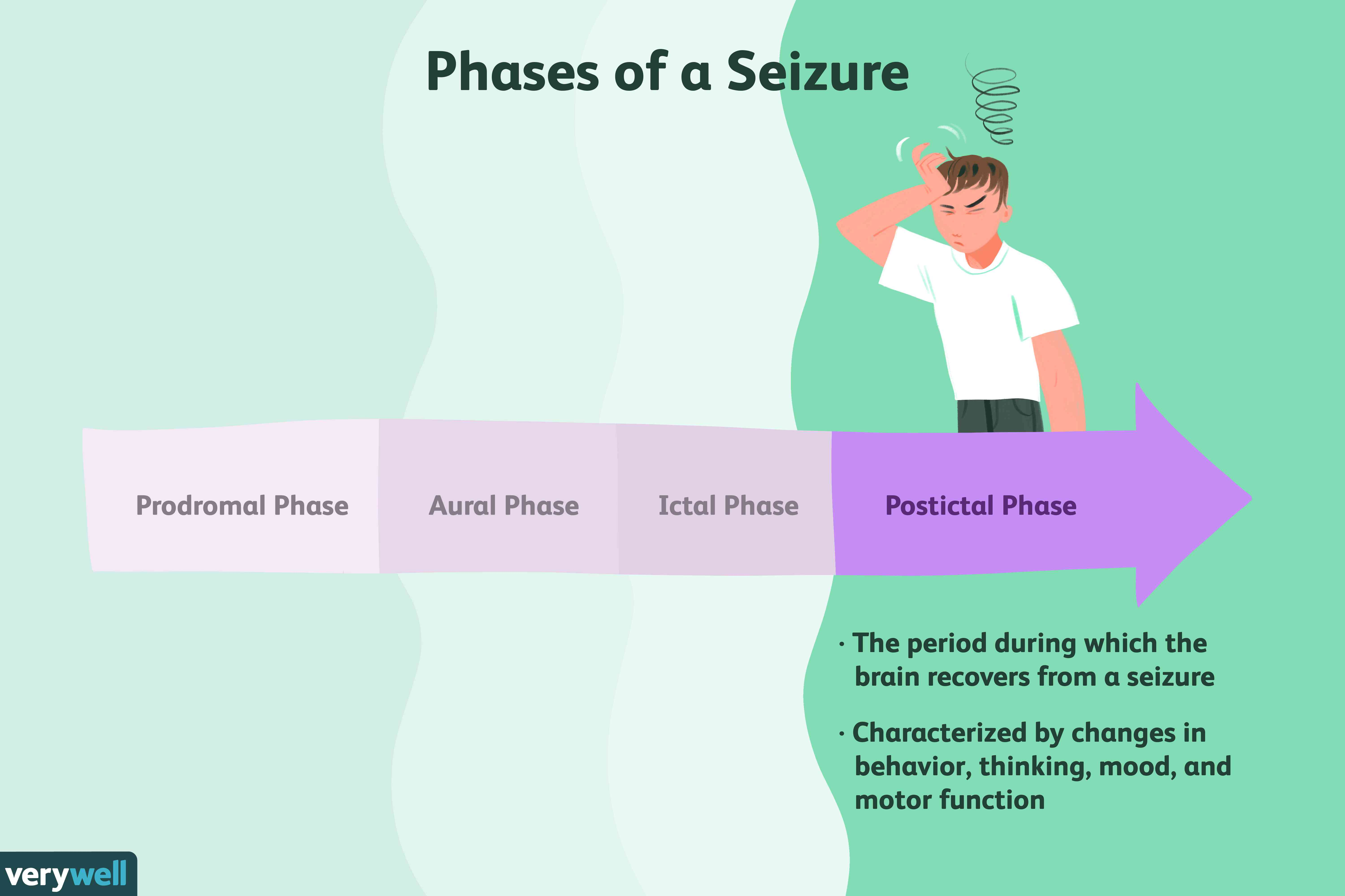 The Postictal Phase of a Seizure