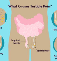 testicle pain causes [ 1500 x 1000 Pixel ]