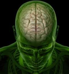brain arteries [ 2154 x 1394 Pixel ]