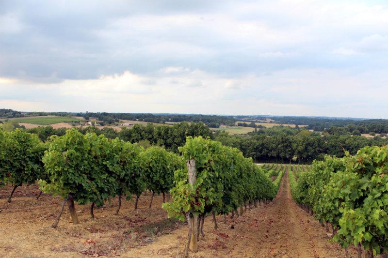 Vignes - Maison Delord - Armagnac