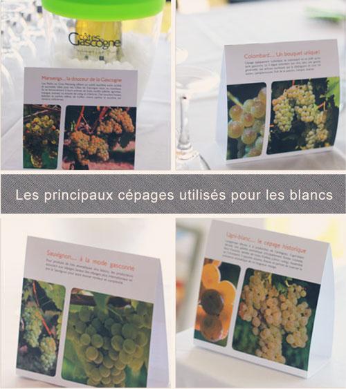 Cépages-blancs-principaux-des-Côtes-de-Gascogne