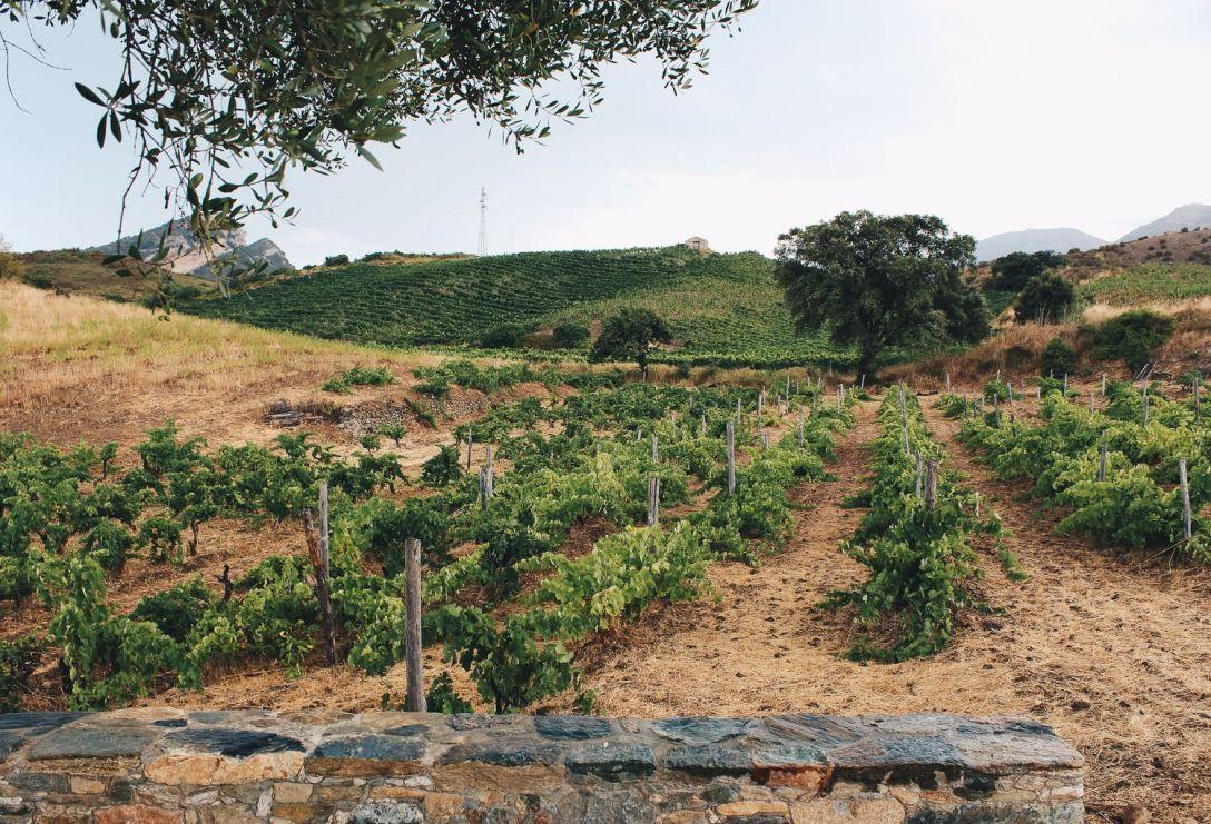 Vignes Laetitia Albertini 2