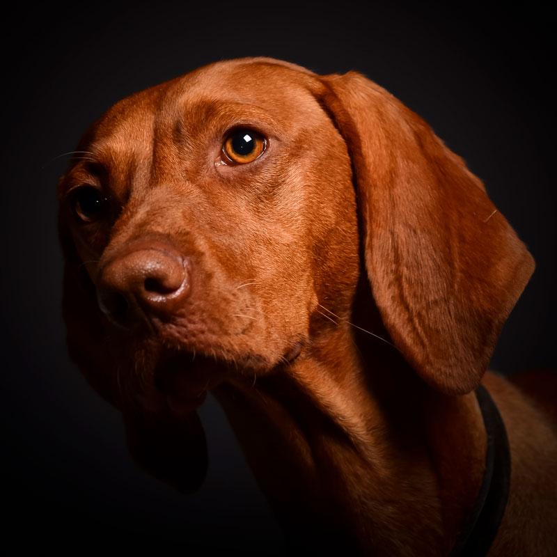 dierendagactie-huisdier-portret-