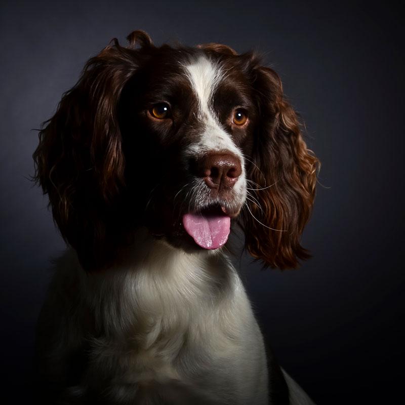 dierendagactie-huisdier-portret