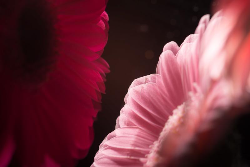 marian-waanders-florals-MVDK20130124_0007-Edit