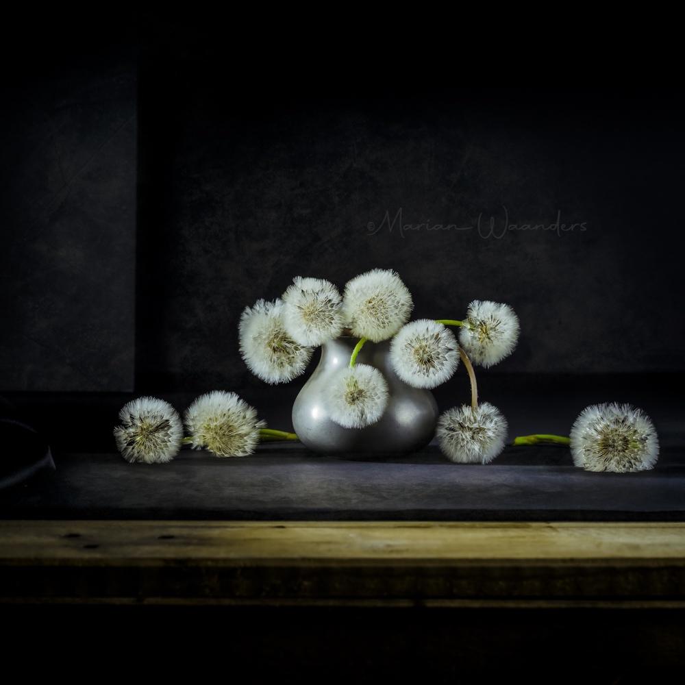 werk-aan-de-muur-still-life-spent-dandelion-verzinhet-fotografie-MVDK-20200428-9647