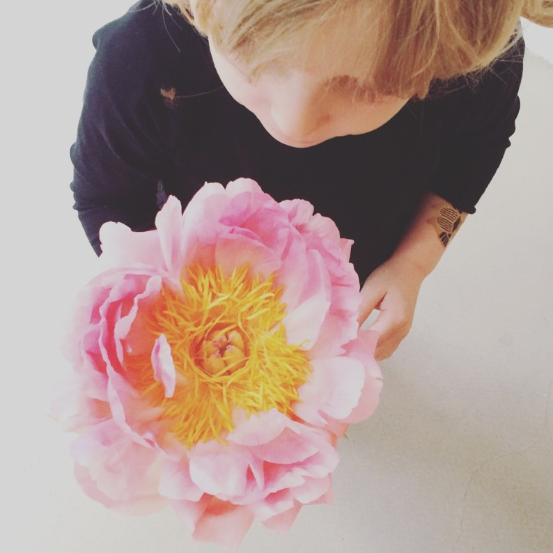 Pink peony from top