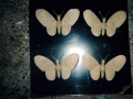 houtsnijwerk-vlinders-alg-begraafplaats-2