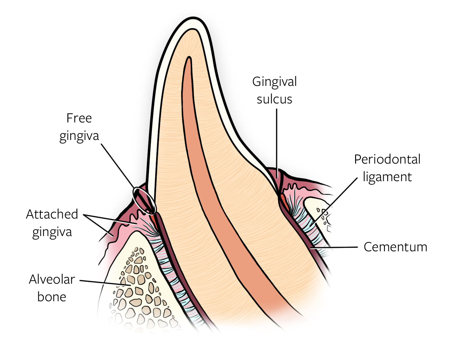 Dentistry And Oral Surgery Practical Skills Online Course