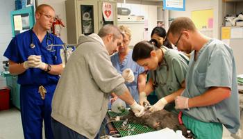 Penn Vet  Emergency ServiceCritical Care