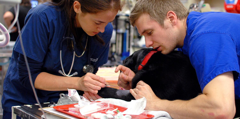 Penn Vet  Anesthesia