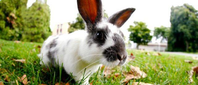Kaninchen auf Gras