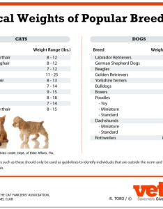 How much should pets weigh also an in depth look at weight management for vetdepot rh