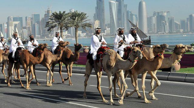 qatar-camel-crop-banner
