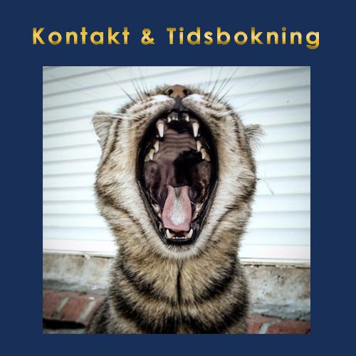 Veterinär för katt i Skåne, Malmö