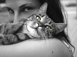 ¿Pueden las mujeres embarazadas vivir con gatos?