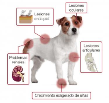 Los síntomas de la Leishmaniasis