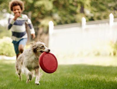 Niño corriendo y jugando con perro