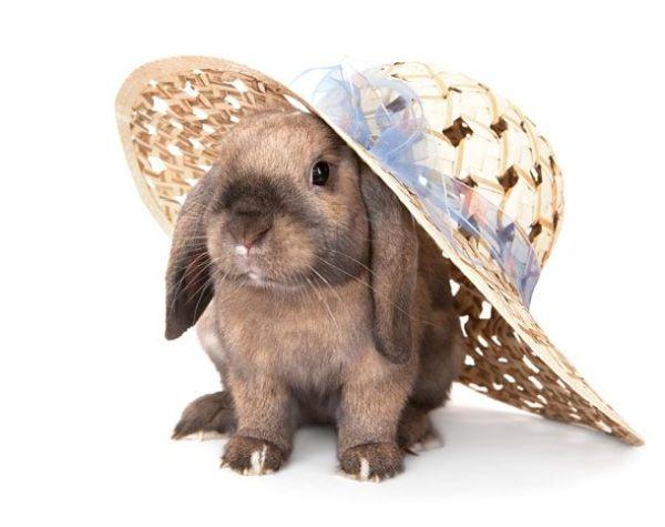 Conejos en vacaciones