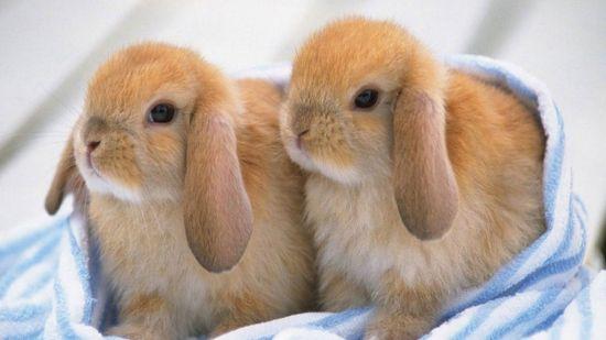 Primeros cuidados de los conejos