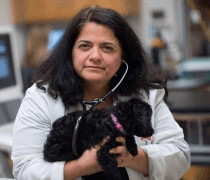 Dr. Teresa DeFrancesco