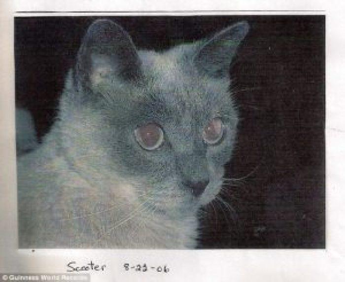 World's Oldest Catt