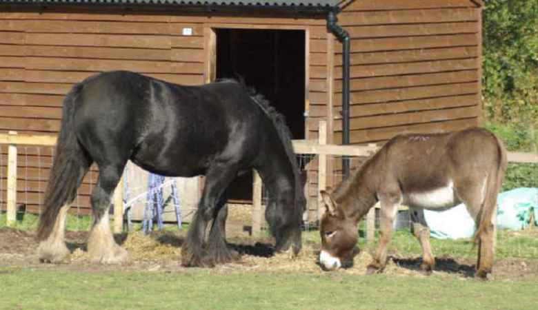 DONKEYS and HORSES DIFFERENCES & SIMILARITIES