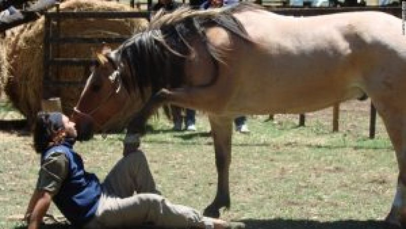 WHY DO HORSES PUT THEIR NOSES TO YOUR FACE
