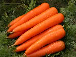 Carrots Perfect Fruits And Vegetables For Dogs