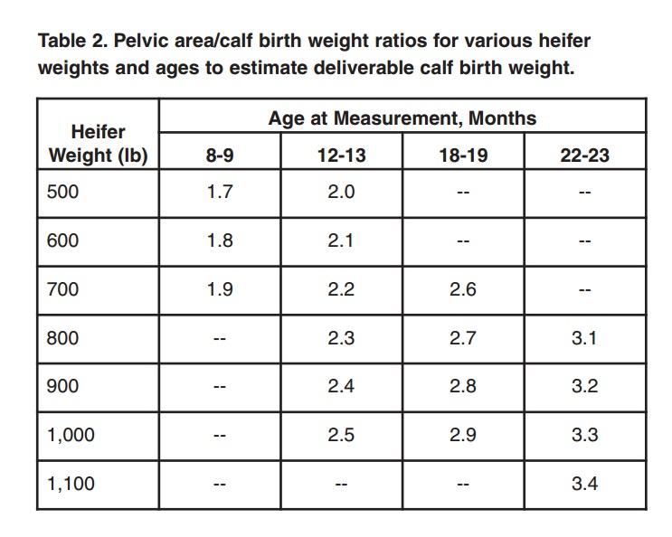 Pelvic Area Measurements in Replacement Heifers