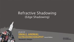 Atlas Of Small Animal Ultrasonography 2nd Edition (Videos Screenshot)