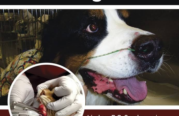 Canine And Feline Anesthesia And Co Existing Disease PDF