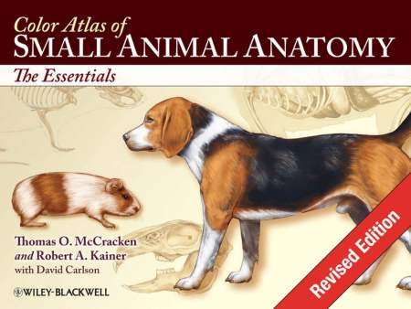 Wheater's Functional Histology – A Text And Colour Atlas, 5th Edition PDF