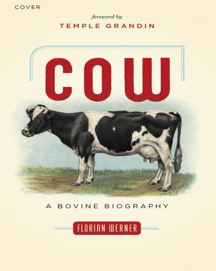 Cow A Bovine Biography