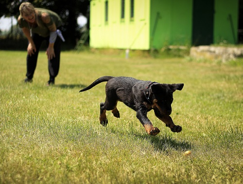 TIPS AND TRICKS TO TRAIN PUPPY AT HOME