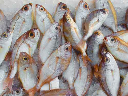 What Are Sources Of Omega-3 For Fish Feed