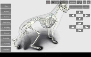 3D Dog Anatomy Android App 6