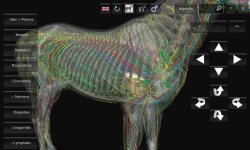 3D Horse Anatomy Android App 05